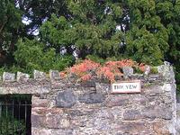 Florencecourt Yew