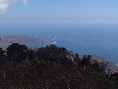 Valdivian Cloud Forest Bosque De Fray Jorge