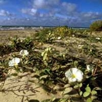 Galveston Island SP