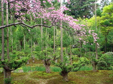 Gardens Of Ryoanji