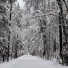 Apgar Lookout Trail