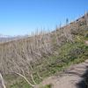 Lower Quartz Lake Trail