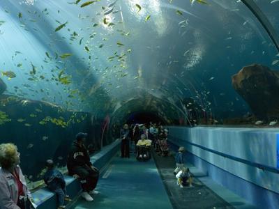 The Ocean Voyager Exhibit Tunnel