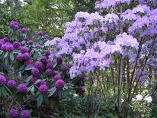 Gerdemann Botanical Garden