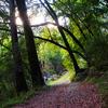 Geronimo Trail 240 - Tonto National Forest - Arizona - USA