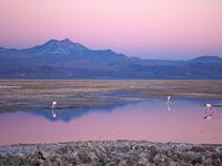 Gigante de Atacama