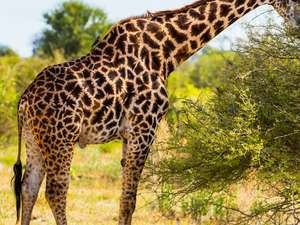7 Day Botswana Safari Photos