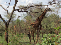 Ultimate Rwanda Wildlife Safari