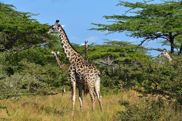 Selous Game Reserve Photos