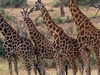 Amazing 4 Days Safari To Murchison Falls National Park