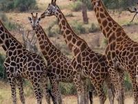 Amazing 4 Days Safari To Murchison Falls National Park