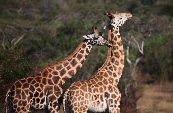 10 Days Journey To The Jungles Of Uganda Photos