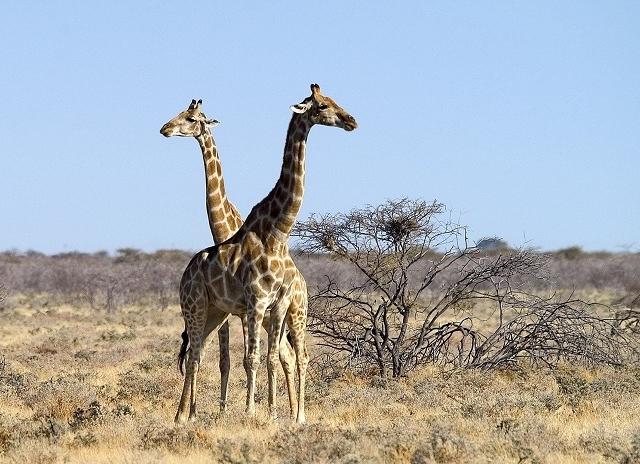 7 Day Namibia Desert And Etosha National Park (Camping) Photos