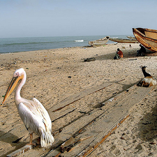 Goat And Canoe In Pelicano - Senegal