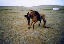 Gobi Desert - Mongolia Horse Tricks