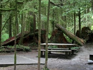 Gold Basin Group Campground