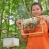 Gombizau Honey Bee Farm - Kudat