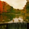 Goose Pondin Nov Sm