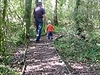 Gordon Park Scenic Reserve - North Island - New Zealand