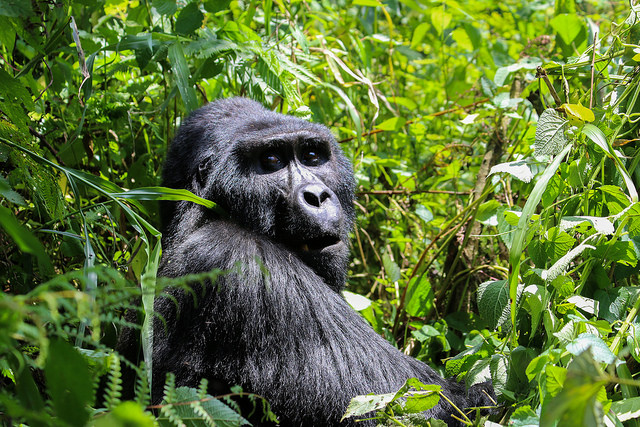 Ladies Only Gorilla Trekking and Savannah Safari in Uganda Photos