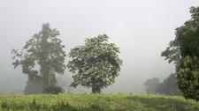Gorumara NP Landscape
