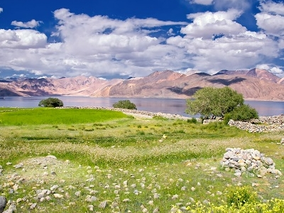 Grass Field In Pangong Lake