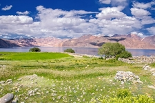 Grass Fields In Pangong Lake