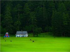 Grasslands Of Khajjiar