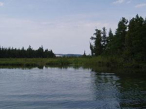 Hierba del río