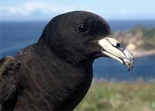 Great Barrier Island Aotea - North Island - New Zealand