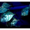 Greater Cleveland Aquarium - Ohio