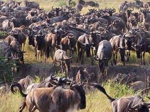 Serengeti Safari And Wildlife Tours Fotos