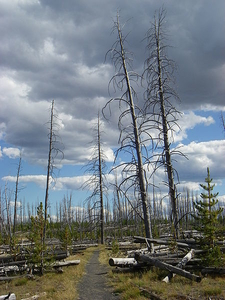 Grebe Lake Trail - Yellowstone - USA