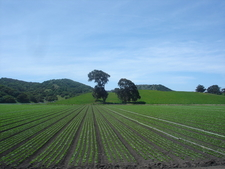 Greenfield California
