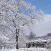Greensboro NC Arboretum