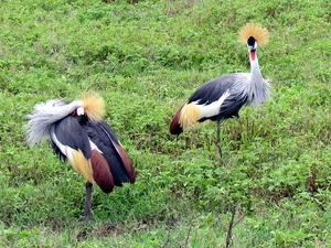 Wildlife Adventure Safari Photos