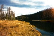 Grizzly Lake Trail - Yellowstone