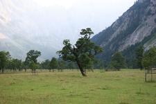 Großer Ahornboden, Tyrol, Austria