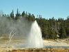 Grotto Fountain Geyser - Yellowstone - USA