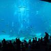 Guests Observe Navy Divers