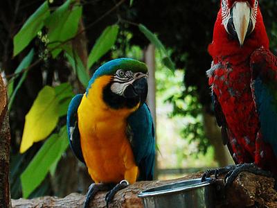 Gulf Breeze Zoo Gulf Breeze