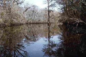 Gum Swamp Creek
