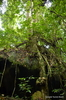 Gunung Gading National Park - Forest