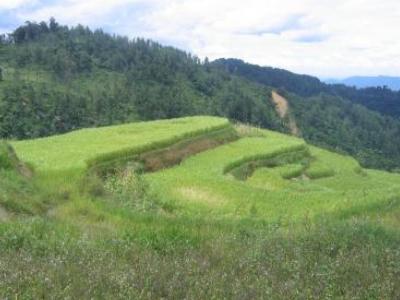 Gunung Halimun Salak National Park