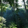 Vegetation Of Gunung Palung
