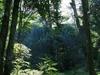 Gunung Palung Jungle