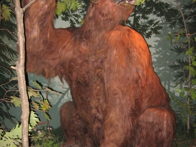 Rusty The Giant Ground Sloth