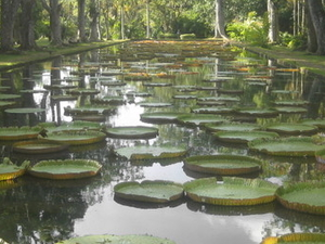 Sir Seewoosagur Ramgoolam Jardín Botánico
