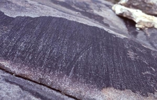 Glacial Patina And Striations In Upper Right Fork Canyon