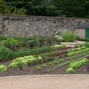 A Section Of Vegetable Garden